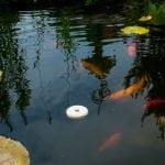 Floating Dunks