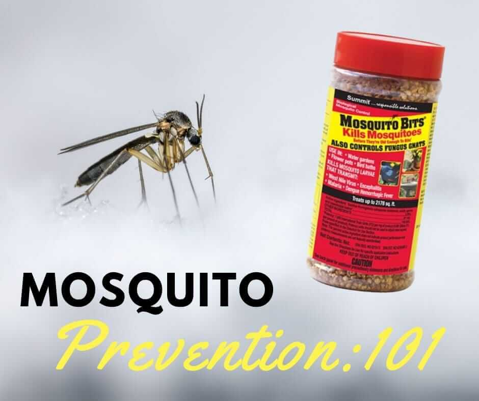 Mosquito Prevention 101