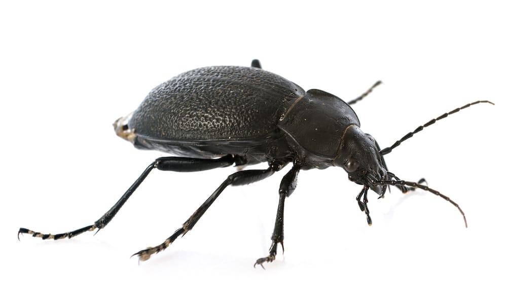 Summit® Pest Control