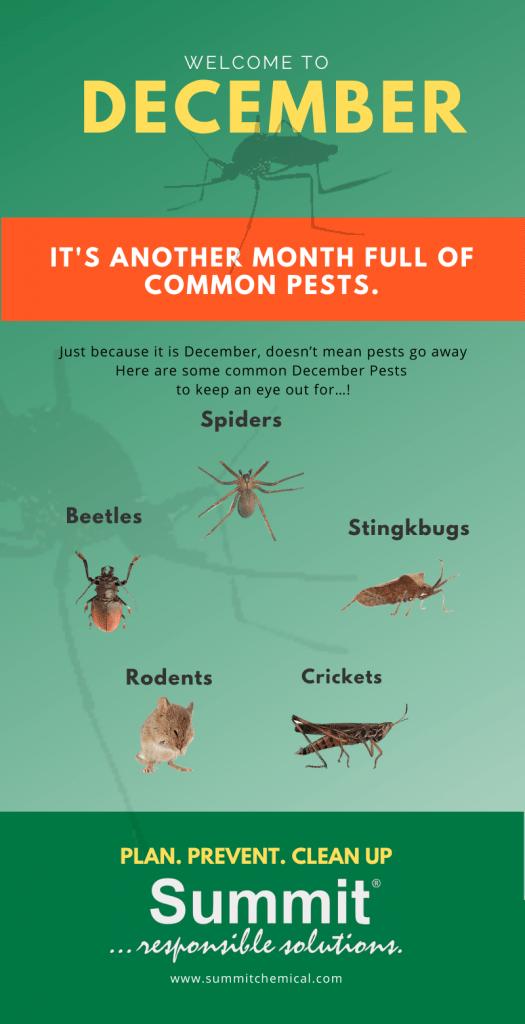 December Pests